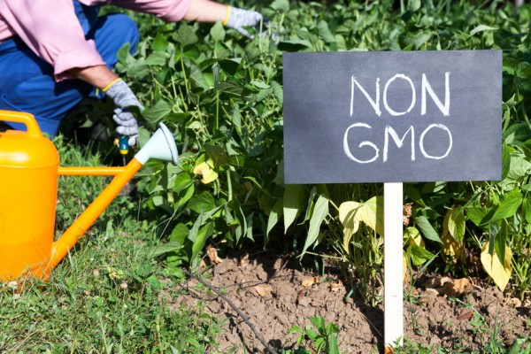 Non-GMO sign and a gardener in a garden