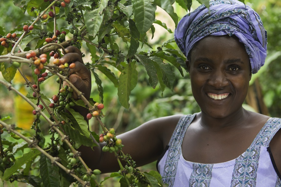The Fair Trade Company/Nusch: with the help of GEPA, coffee farmer Agnes Tumuramye from Uganda is converting to organic.