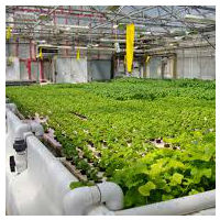 Indoor agriculture on substrate - is it organic?
