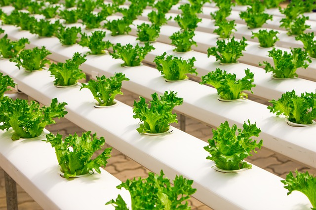 Hydroponic food production