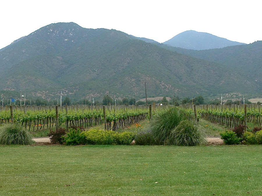 The biodynamic wineyard Emiliana is one of Chile´s best practice organic enterprise.