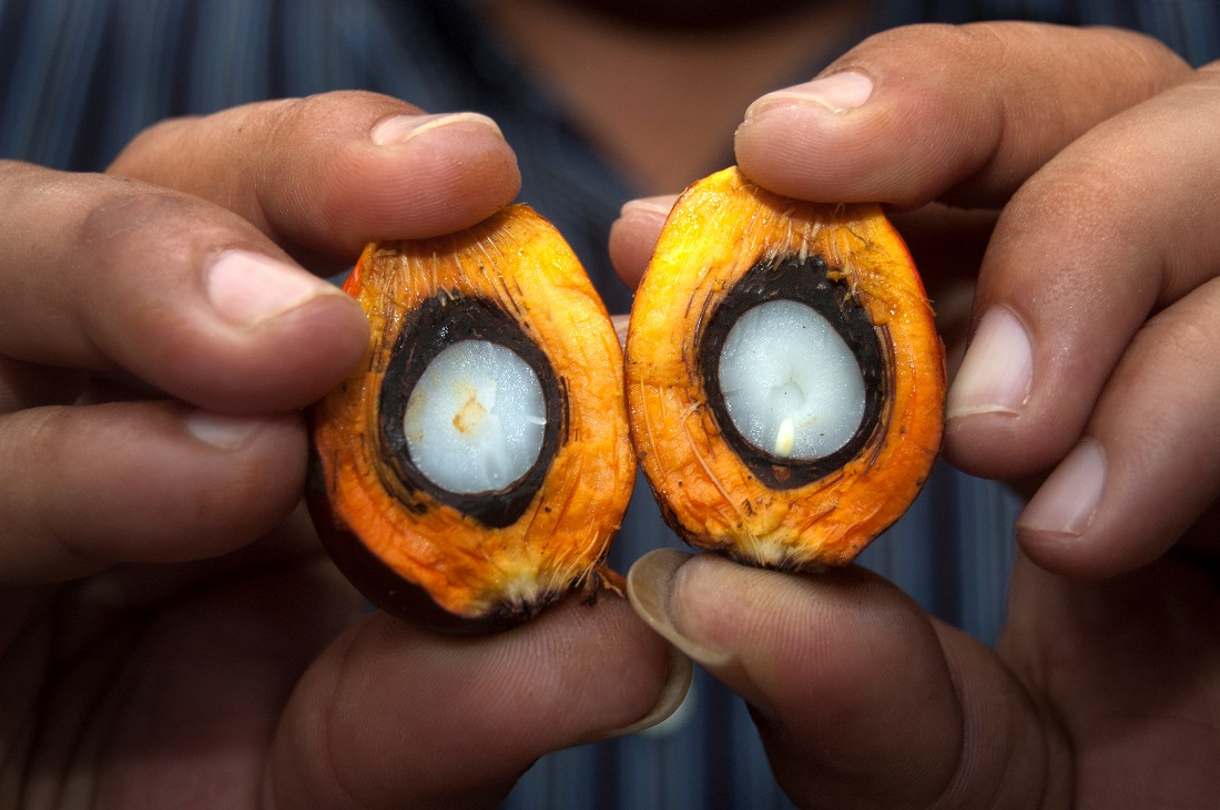 Fruits of oil palm
